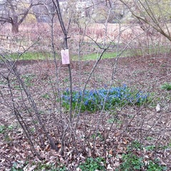 Photo taken at Arnold Arboretum by Kateryna on 4/14/2013