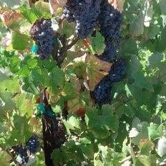 Photo taken at Oak Mountain Winery by Brett B. on 8/18/2013