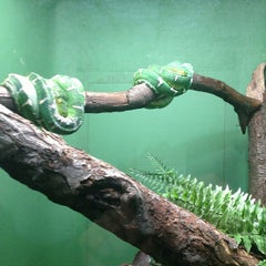 Photo taken at Bronx Zoo by Jana T. on 3/30/2013
