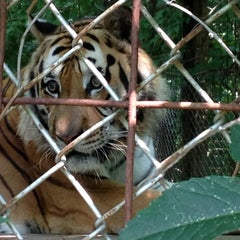 Photo taken at Exotic Feline Rescue Center by chris c. on 7/21/2014