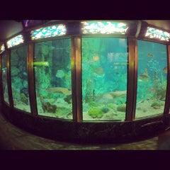 Photo taken at Shedd Aquarium by Charles on 5/27/2013