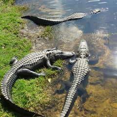 Photo taken at Big Cypress Oasis Visitor Center by Mike O. on 2/10/2014
