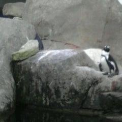 Photo taken at National Aviary by Alejandro I. on 9/17/2011
