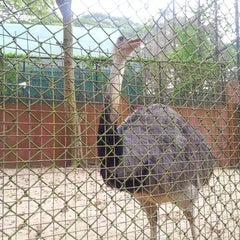 Photo taken at Trivandrum Zoo by Ashok A. on 1/6/2014