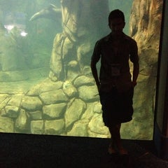 Photo taken at Moody Gardens Aquarium Pyramid by Alkan on 10/3/2012