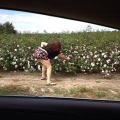 Photo taken at Cotton Fields in GA by ❤️ MeliMel ❤️ on 9/30/2013