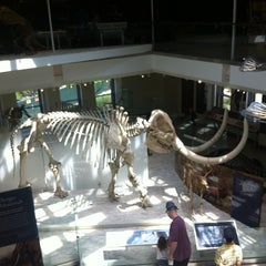 Photo taken at Natural History Museum of Los Angeles County by Vika on 4/21/2013