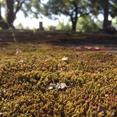 Photo taken at Saint Helena Public Cemetery by Abby F. on 8/8/2013