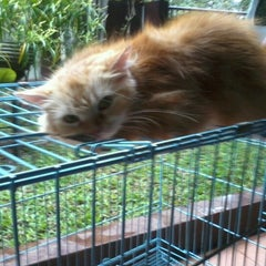 Photo taken at Waroeng SS (Spesial Sambal) by salon hewan c. on 10/20/2012