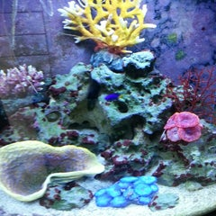 Photo taken at FishPlanet Aquarismo by Rafael F. on 3/14/2013