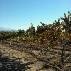 Photo taken at Mount Palomar Winery by Patrick A. on 10/14/2012