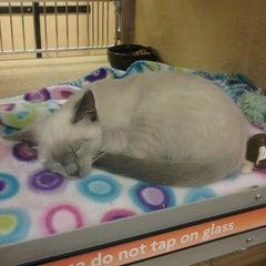 Photo taken at PetSmart by Mandy O. on 11/15/2012