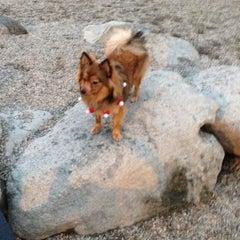 Photo taken at Emery Barnes (Dog Park) by Fabio R. on 12/26/2013