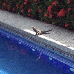 Photo taken at The Backyard Hotel Pool by Alejandro O. on 10/30/2012