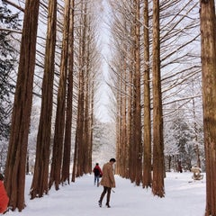 Photo taken at 남이섬 (Nami Island) by Kevin S. on 2/9/2014