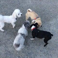 Photo taken at Emery Barnes (Dog Park) by Jenn L. on 4/1/2014