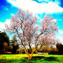 Photo taken at Villa Doria Pamphilj by glauco r. on 3/4/2013