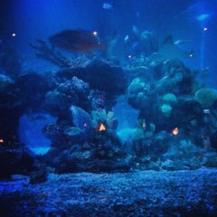 Photo taken at Coral Reef Restaurant by John P. on 8/11/2013