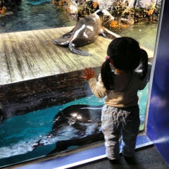 Photo taken at 海遊館 (Osaka Aquarium Kaiyūkan) by Paul A. on 4/5/2013