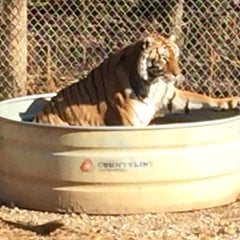 Photo taken at Exotic Feline Rescue Center by Adam P. on 11/8/2015
