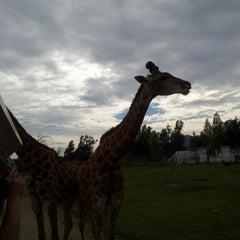 Photo taken at Parque Safari by Vito G. on 12/2/2012