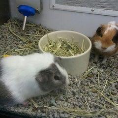 Photo taken at Petco by Jaineen B. on 11/20/2011