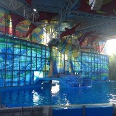 Photo taken at Nautilus Amphitheater at SeaWorld by Pepc C. on 7/6/2014