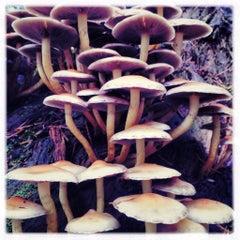 Photo taken at Leenderbos by Sabine B. on 10/14/2013
