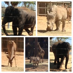 Photo taken at African Forest @ Houston Zoo by DJmo P. on 3/15/2013