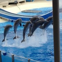 Photo taken at SeaWorld Orlando by Bruna M. on 1/18/2013