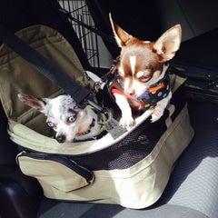 Photo taken at Howard Dog Park by Gloria (Glorioke) B. on 6/15/2014