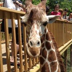 Photo taken at Elmwood Park Zoo by Erin L. on 6/5/2013