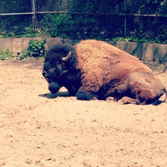 Photo taken at High Park Zoo by Ashley Jane L. on 5/19/2013
