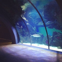 Photo taken at Acquario Civico by Federico T. on 10/8/2012