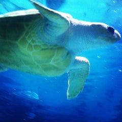 Photo taken at Adventure Aquarium by Kelley on 7/22/2013