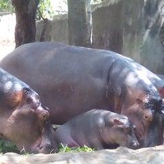 Photo taken at Trivandrum Zoo by Sasha India on 3/4/2015