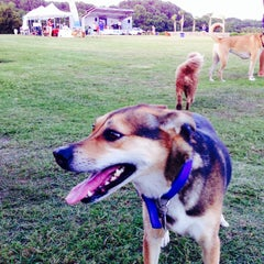 Photo taken at James Island County Park Dog Park by Rick W. on 7/10/2014