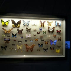 Photo taken at Museo Regionale di Scienze Naturali by Cristina Z. on 8/1/2013