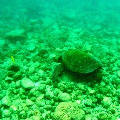 Photo taken at Hōnaunau Bay Puʻuhonua Pt. by travelholic on 4/26/2015