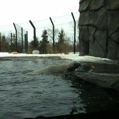 Photo taken at Polar Bear Odyssey At Como Park by Samuel G. on 3/23/2013