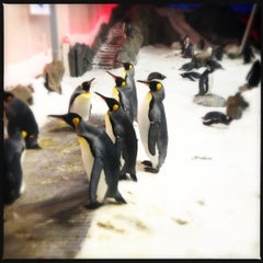 Photo taken at SEA LIFE Melbourne Aquarium by Hennley S. on 12/7/2012