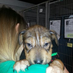 Photo taken at Texas Humane Heroes by Cyndi S. on 4/3/2013