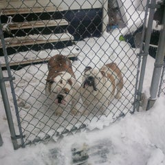 Photo taken at Mahoning County Dog Pound by Judy V. on 2/27/2015