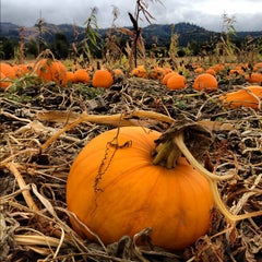 Photo taken at Kruger's Farm Market by Monty . on 10/14/2012