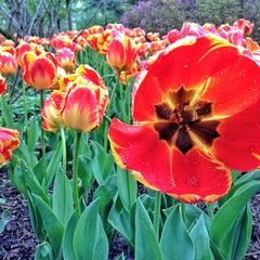Photo taken at Sherwood Gardens by Schmamie on 4/30/2013