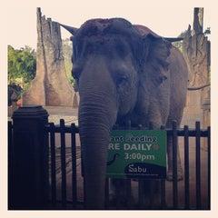 Photo taken at Australia Zoo by Bernadette U. on 6/28/2013