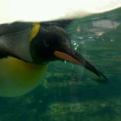 Photo taken at Penguin House at Riverbanks Zoo by Kristy S. on 10/8/2011