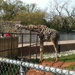 Photo taken at The Oklahoma City Zoo by Lisa E. on 3/27/2012