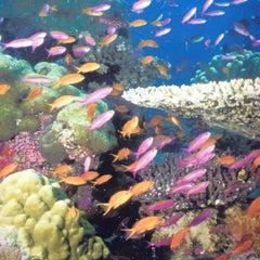Photo taken at Adventure Aquarium by John N. on 9/30/2012