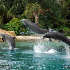 Photo taken at Discovery Cove Parking by Fabio C. on 3/8/2014